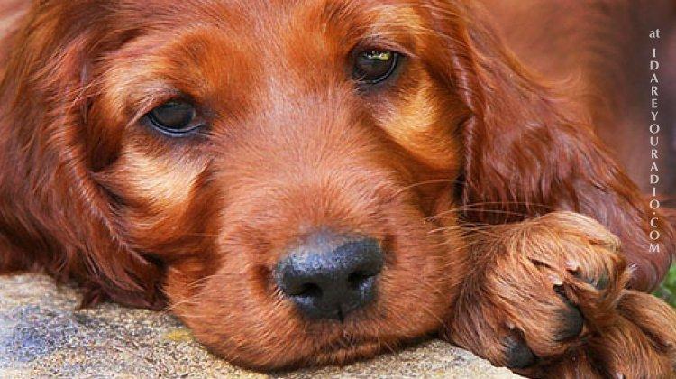 DEBRA-DOG
